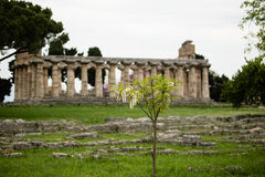 Neptune Temple, Paestum Stock Photos
