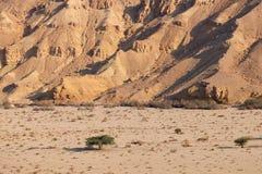 Neqev沙漠旱谷风景 库存照片