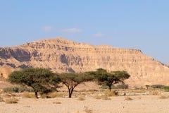 Neqev沙漠旱谷风景 免版税库存照片