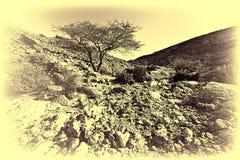 Neqev沙漠的葡萄酒图象在以色列 免版税库存图片