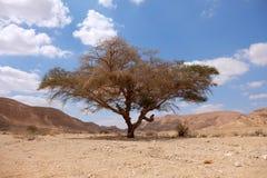 Neqev沙漠风景 免版税图库摄影
