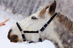 ner den head hästen för armen s Arkivbilder