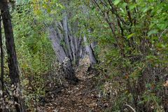 Ner en skogsbevuxen slinga Royaltyfri Fotografi