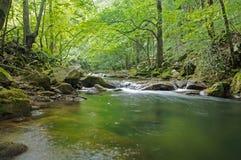 Nera河在绿色森林里 免版税库存图片