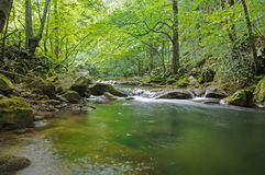 Nera rzeka w zielonym lesie Obraz Royalty Free