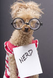 The Nerd Royalty Free Stock Photo