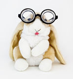 Nerd Bunny royalty free stock images