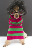 Nerdy Christmas Stripe Dog Royalty Free Stock Photo