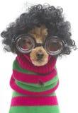 Nerdy julhund Fotografering för Bildbyråer