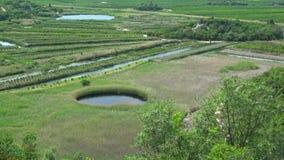 Neretva-delta, Croacia almacen de metraje de vídeo
