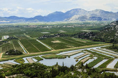 Neretva river delta in Croatia Royalty Free Stock Image