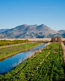 Neretva valley with hills in distance. Beautiful and green Neretva valley in southern Croatia Stock Image