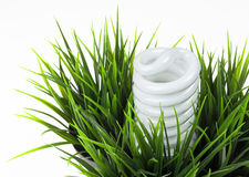 ?nergy che conserva lampadina in erba verde Fotografia Stock Libera da Diritti