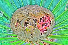 Nerja hjärtan av palmträdet Arkivbilder