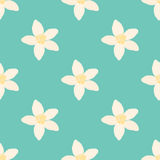 Neroli flower seamless pattern, oil plant, essential cosmetics. Vector illustration Stock Image