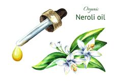 Neroli oil. Watercolor hand drawn illustration, isolated on white background. royalty free illustration