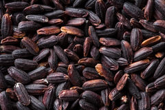 The nerone rice. Stock Photo