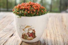Nertera Flower dans le pot de nativité Photographie stock libre de droits
