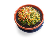 Nertera plant in flowerpot Stock Images