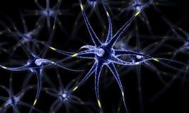 Nerv- nätverk, hjärnceller, mänsklig nervsystem, illustration för Neurons 3d Royaltyfri Foto