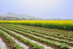Nervature prima della fioritura della terra della violenza in molla soleggiata nebbiosa Fotografia Stock Libera da Diritti