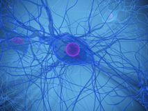 Nerve cell Royalty Free Stock Photo