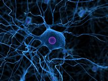 Nerve cell Stock Image