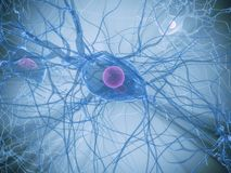 Nerve cell Stock Photos