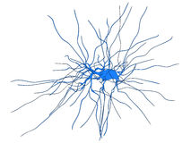 Nerve cell Stock Photography