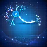 Nerve cell. Anatomy detailed illustration on an abstract blue scientific background Stock Photos