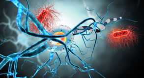 Nerve cell Royalty Free Stock Image