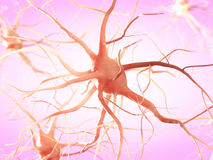 A nerve cell Royalty Free Stock Photography