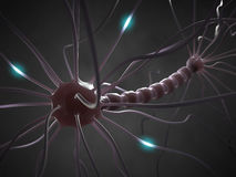 Nerve Cell. Interconnected neurons transferring information with electrical pulses Royalty Free Stock Images