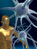 Nerve cells. 3D rendered conceptualization of a nerve cell or neuron and a human figure royalty free illustration