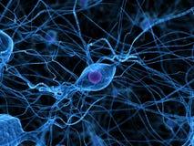 Nerve cells vector illustration