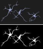 Nerve cells Stock Image