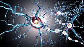 Nerve cells, concept for neurodegenerative and neurological disease, tumors, brain surgery Stock Photography