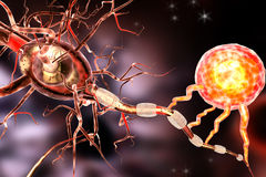 Nerve cells, concept for Neurological Diseases, tumors and brain surgery. Stock Photography