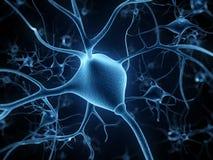 Nerve cells Stock Photo
