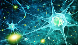 Nerve cells Stock Images