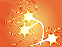 Nerve cells illustration Stock Photography