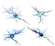 Nerve cells isolated on white background. 3d illustration of nerve cells, concept for Neurological Diseases, tumors and brain surgery Royalty Free Stock Photo