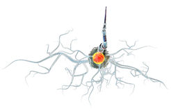 Nerve cells isolated on white background Stock Images