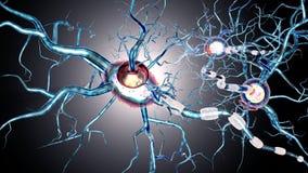 Nervenzellen, Konzept für neurodegenerative und neurologische Erkrankung, Tumoren, Gehirnchirurgie Stockfotografie