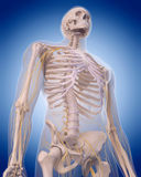 Nerves of the  upper body Royalty Free Stock Photo