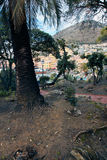 Nervi between the trees Royalty Free Stock Photos