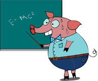 Nervous. Cartoon pig-student in the classroom Royalty Free Stock Photo