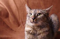 Nervous cat studio shoot Stock Photos