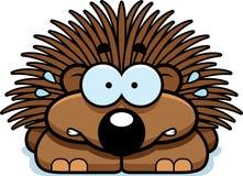 Nervous Little Porcupine Stock Photos