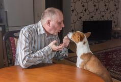Nervous man having rough conversation with patient Basenji dog Stock Photo